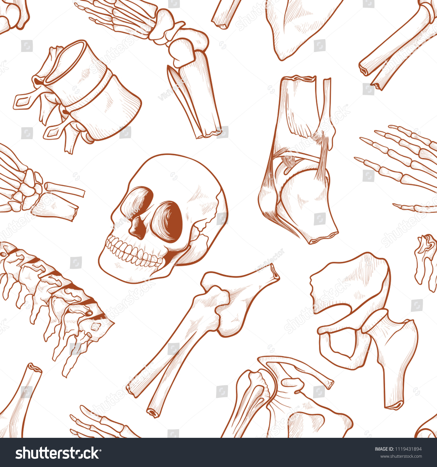Human Bone Background Parts Human Skeletal Stock Vector Royalty