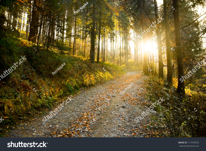 Beautiful Autumn Forest Mountain Path Sunset Stock Photo