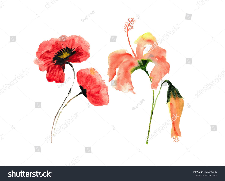 Red poppy hibiscus flower on white stock illustration 1120300982 red poppy and hibiscus flower on white background floral art watercolor illustrator hand izmirmasajfo