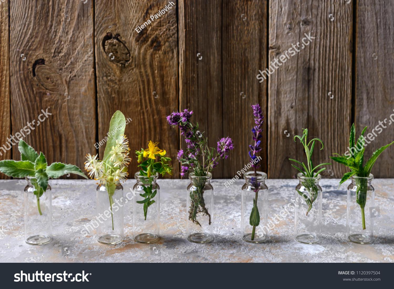 Different Types Fresh Herbs Alternative Medicine Stock Photo (Edit