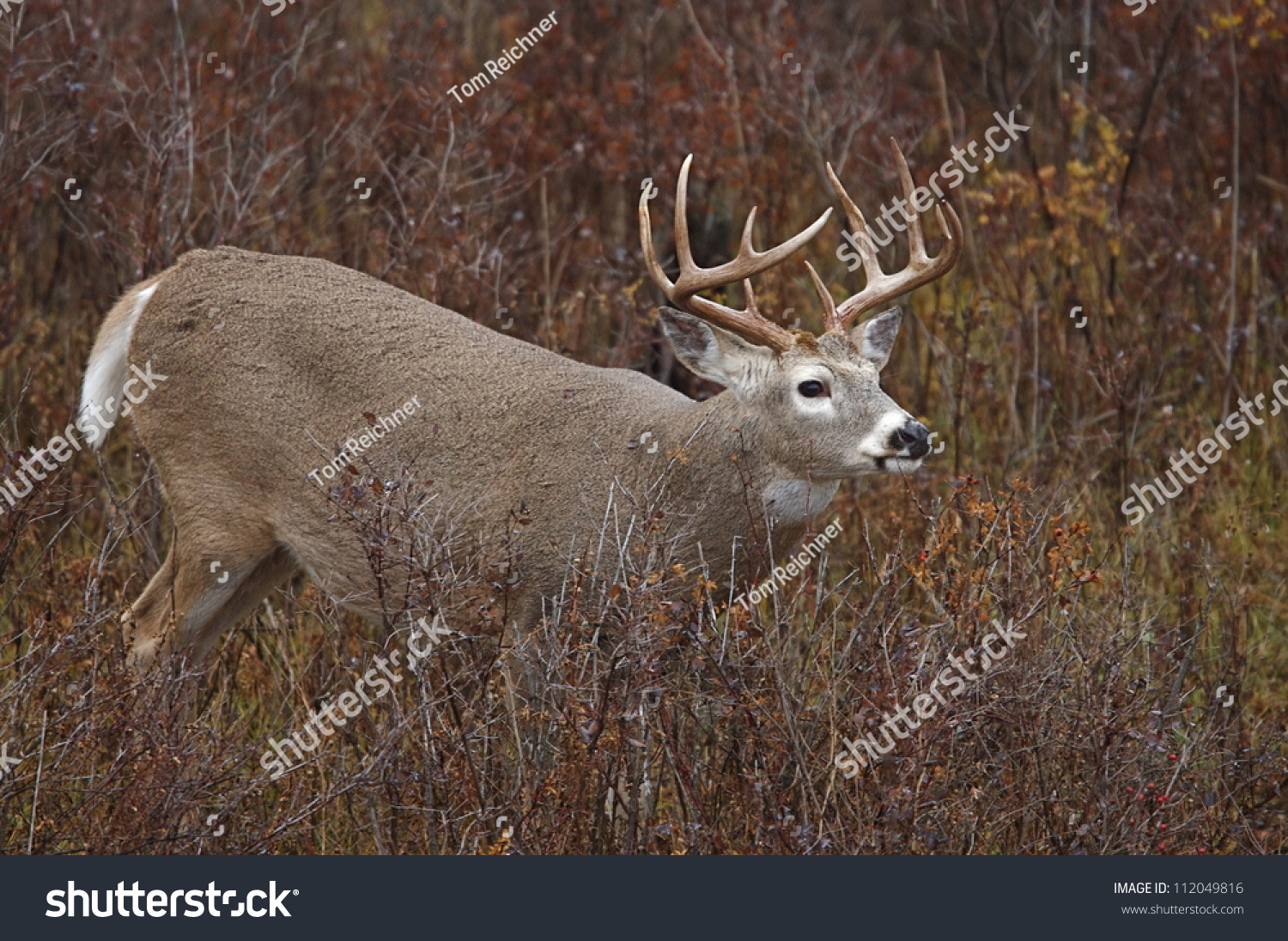 white deer hindu personals The point reyes fallow deer have been spotted 30 miles outside the park boundaries, and to further complicate matters, the vedanta society, a monotheistic hindu sect that dates to the turn of the .