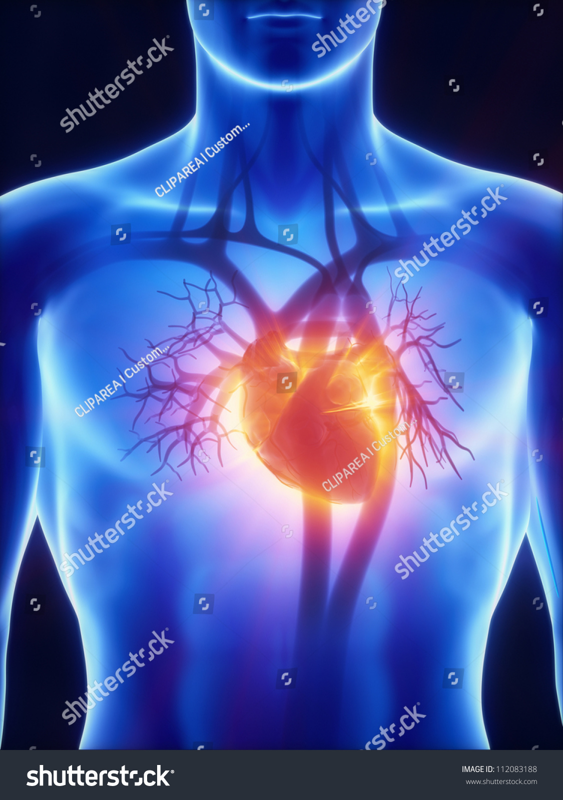Cardiovascular System Glowing Heart Footage Available Stock