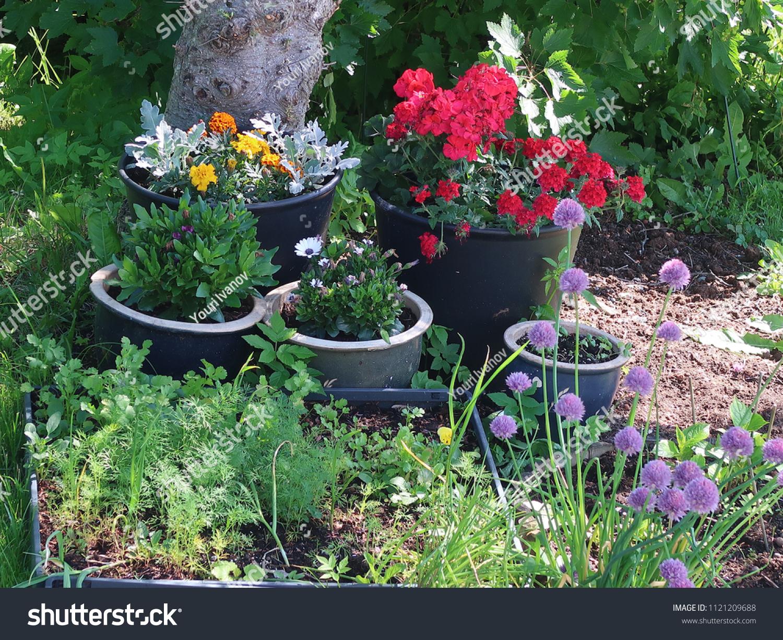Norwegian Liten Garden Flowers Herbs Stock Photo Edit Now 1121209688