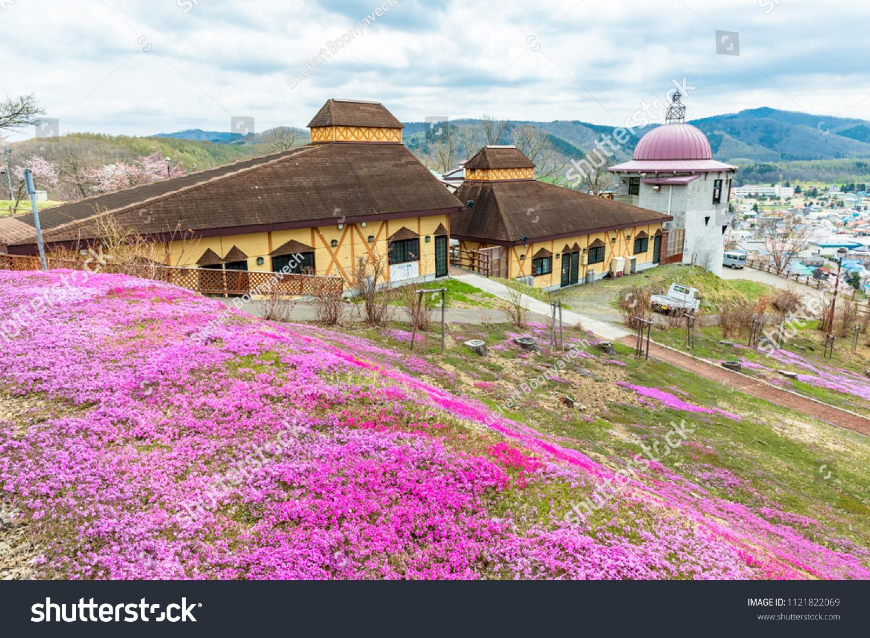Takinouehokkaidojapanmay 112018 Pink Moss Flowers Field Stock Photo