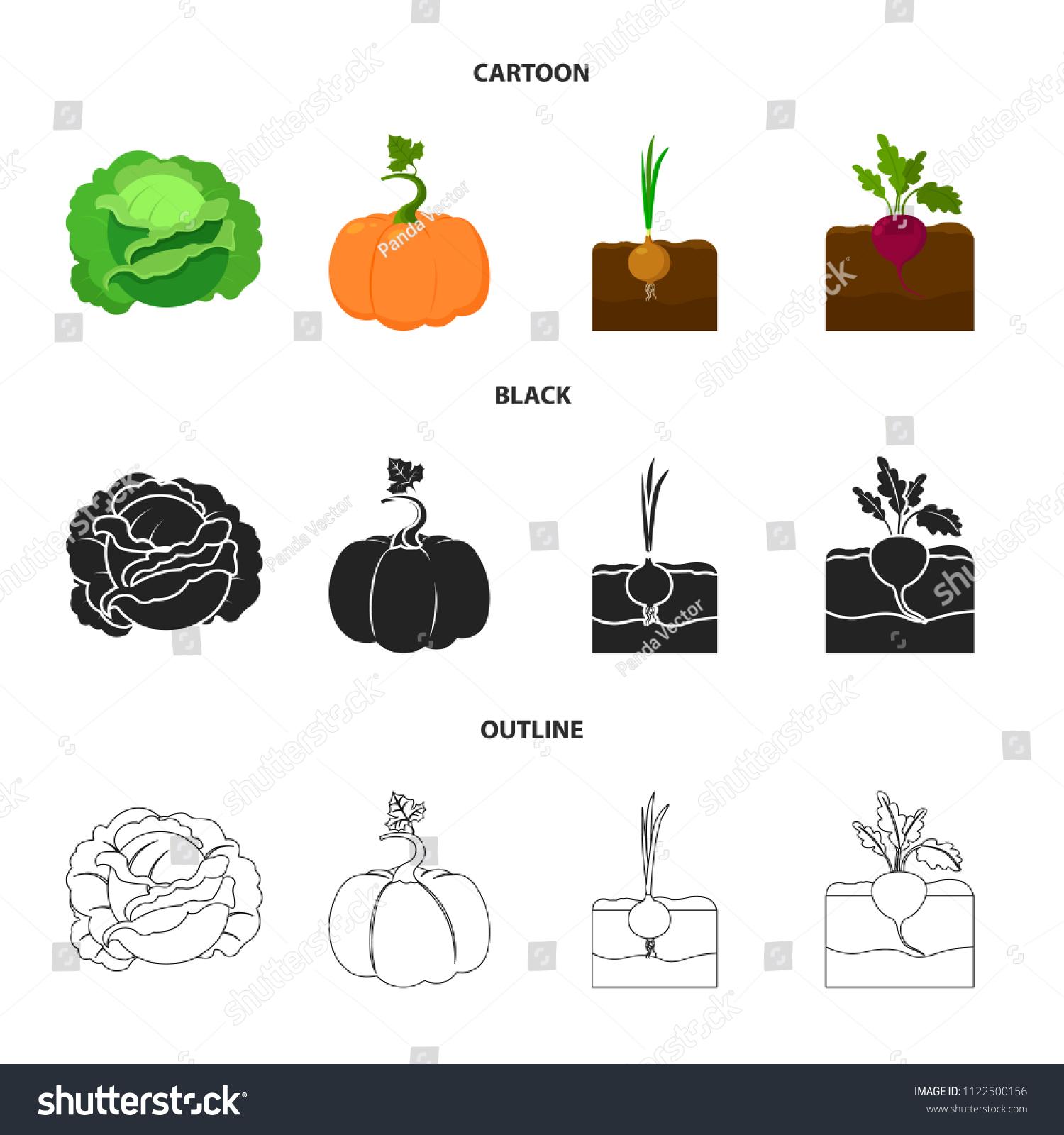 cabbage, pumpkin, onion, buriak plant set collection icons in  cartoon,black,outline style vector symbol stock illustration web  - vector