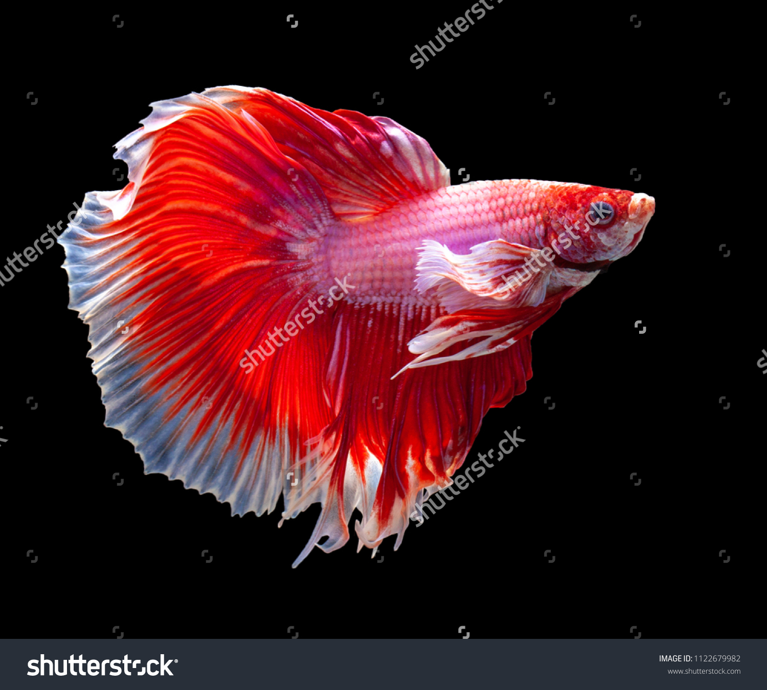 Fancy Pink Color Fish Pattern - Drawing Coloring - androidharga.info