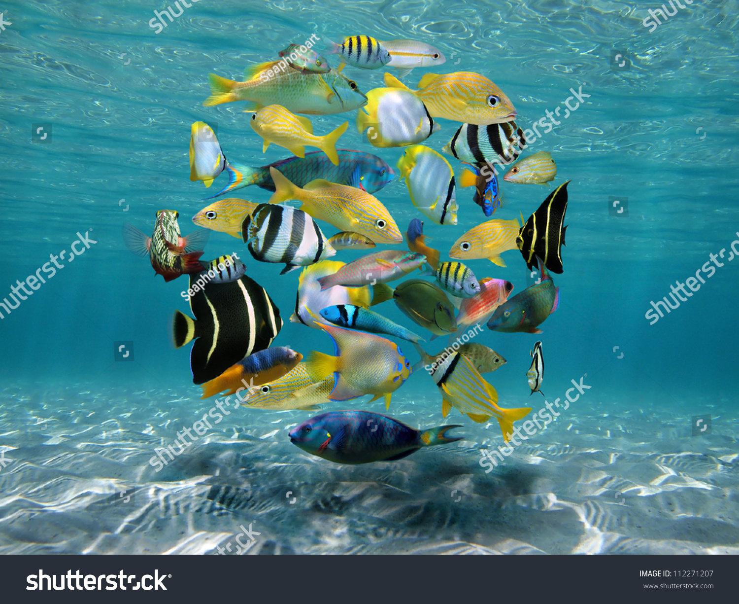 Sea Bottom Of The Sea Fish Seabed Sea: Shoal Of Colorful Tropical Fish Underwater Sea Between