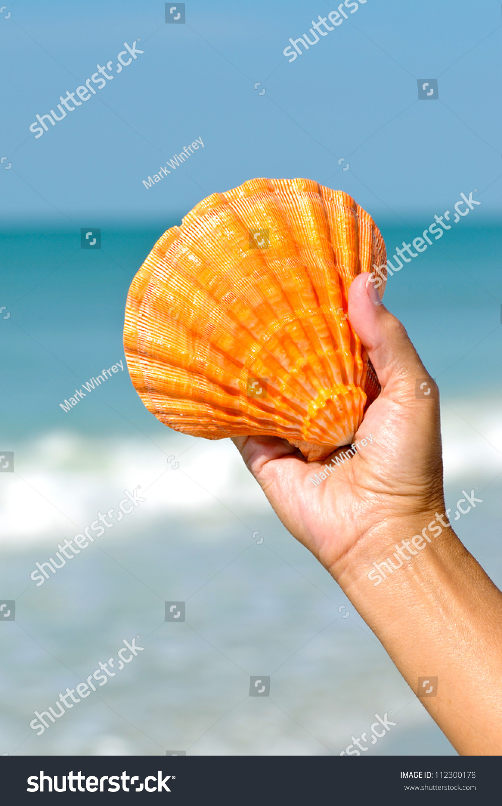 stock-photo-woman-s-hand-holding-a-seash