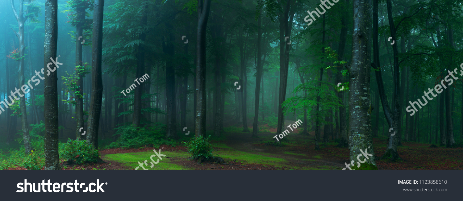 Panorama of foggy forest. Fairy tale spooky looking woods in a misty day. Cold foggy morning in horror forest #1123858610
