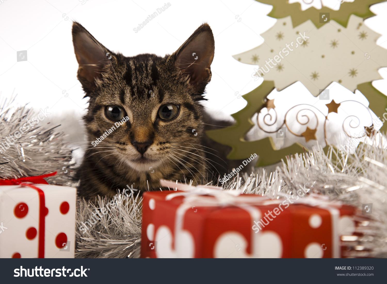 Christmas Cat Stock Shutterstock