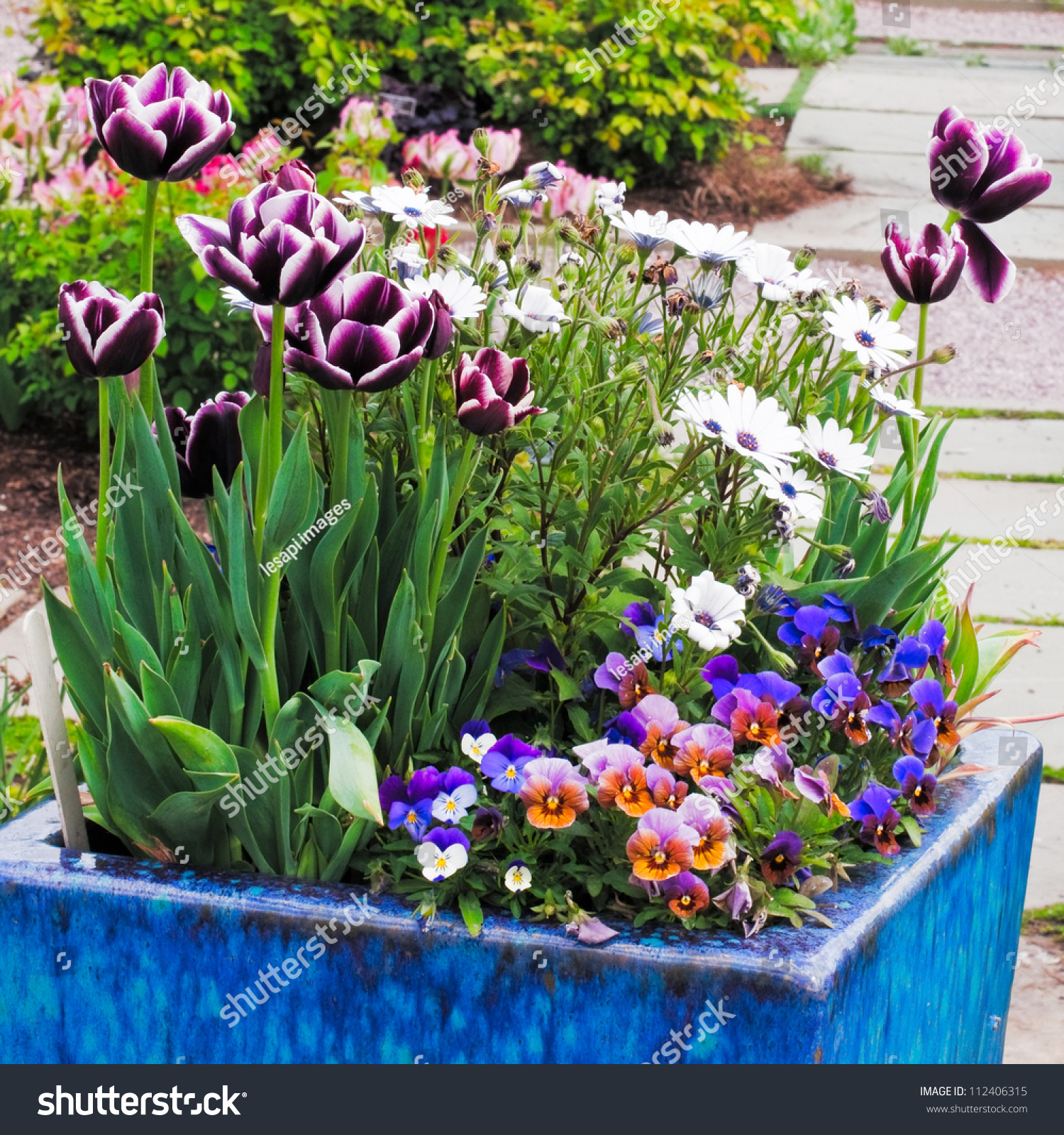 Container Gardening Purple Pink White Spring Stock Photo Edit Now