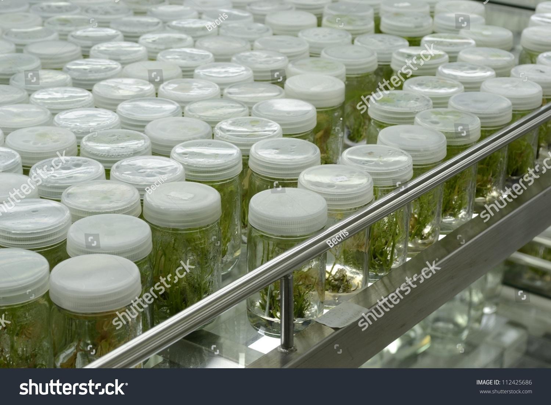 Experiment Plant Tissue Culture Laboratory Stock Photo (Edit