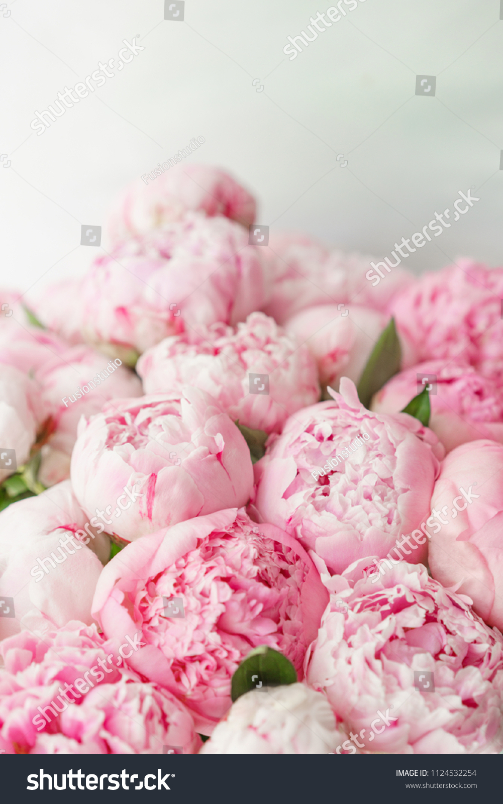Wallpaper Lovely Flowers Pink Peonies Floral Stock Photo Edit Now