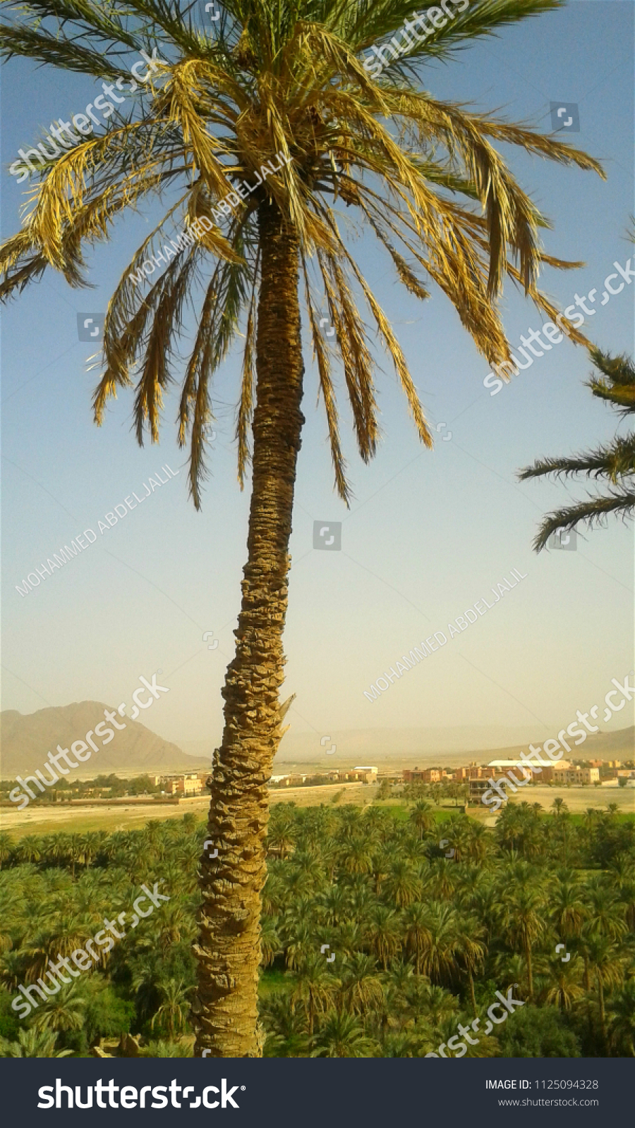 Planter Dans Un Talus tall palm trees talus above valley stock photo (edit now