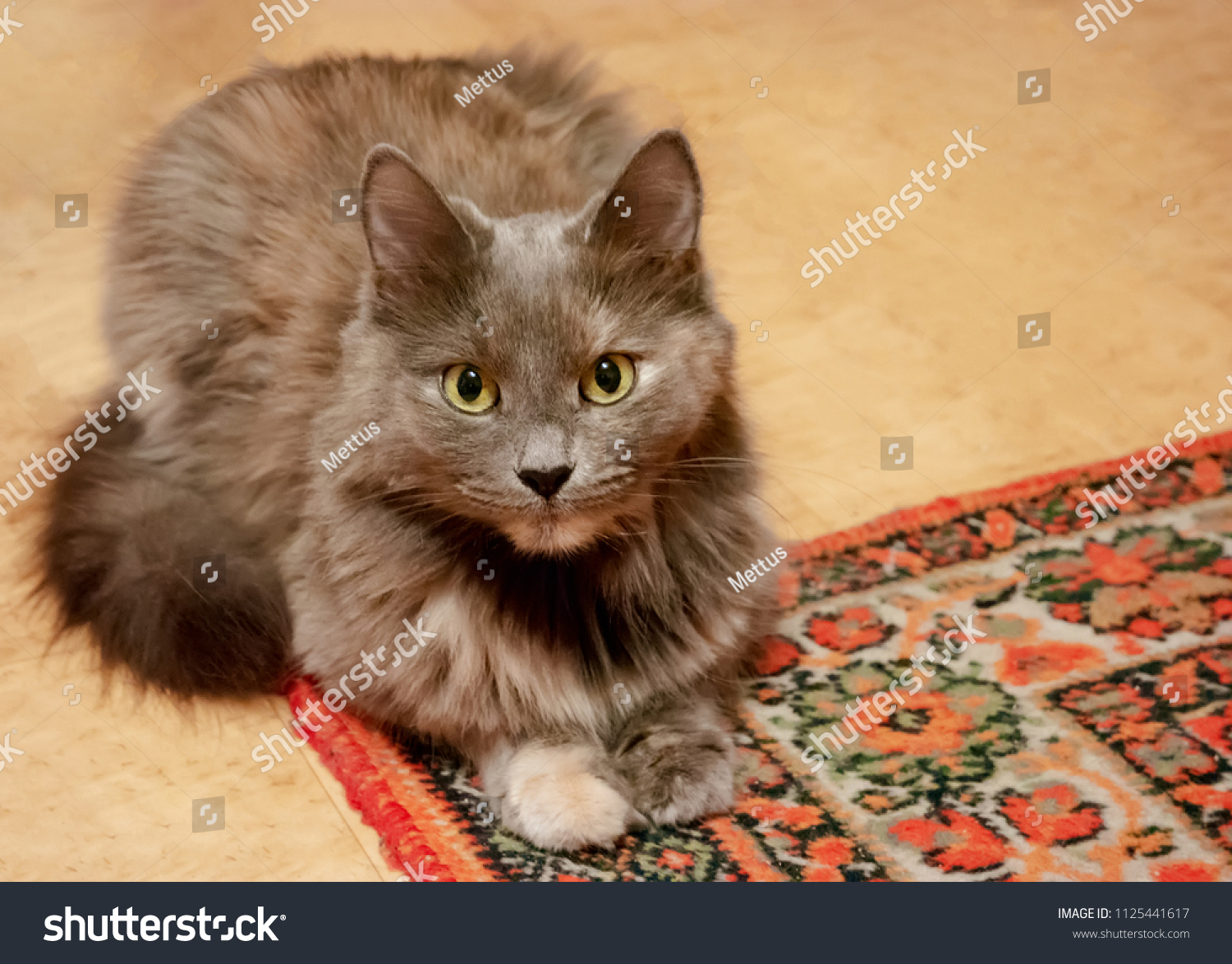 stock-photo-cat-resting-on-the-oriental-