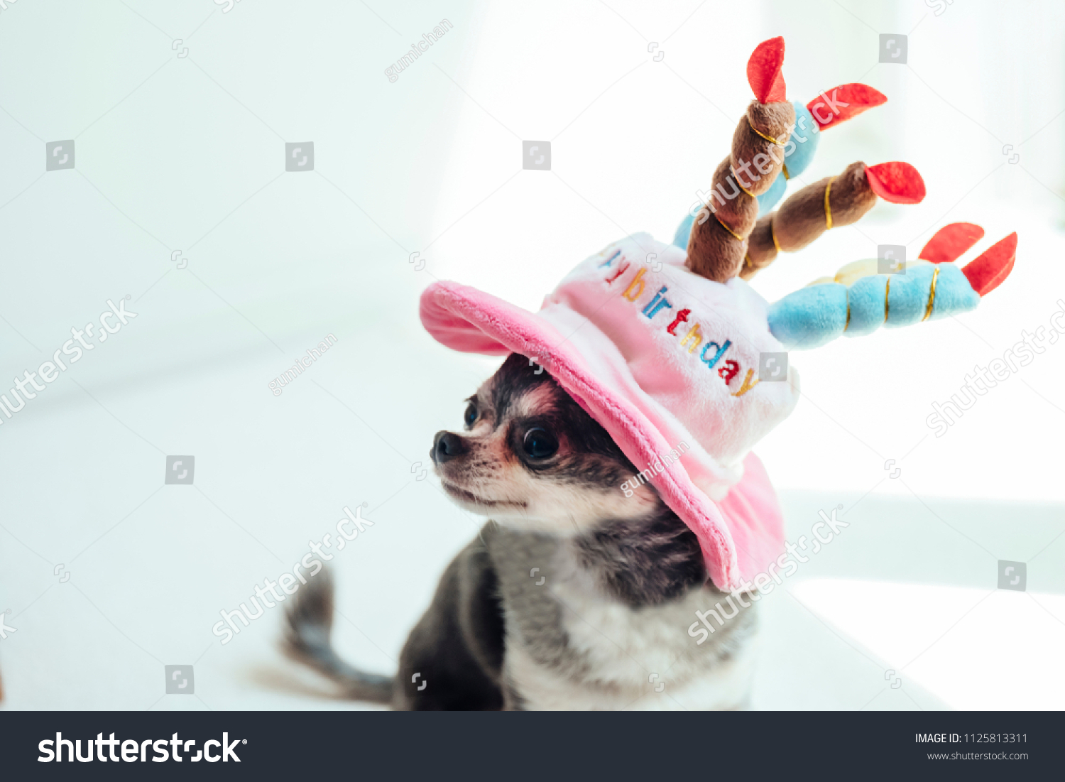 Magnificent Chihuahua Wearing Hat Shape Birthday Cake Stock Photo Edit Now Funny Birthday Cards Online Unhofree Goldxyz
