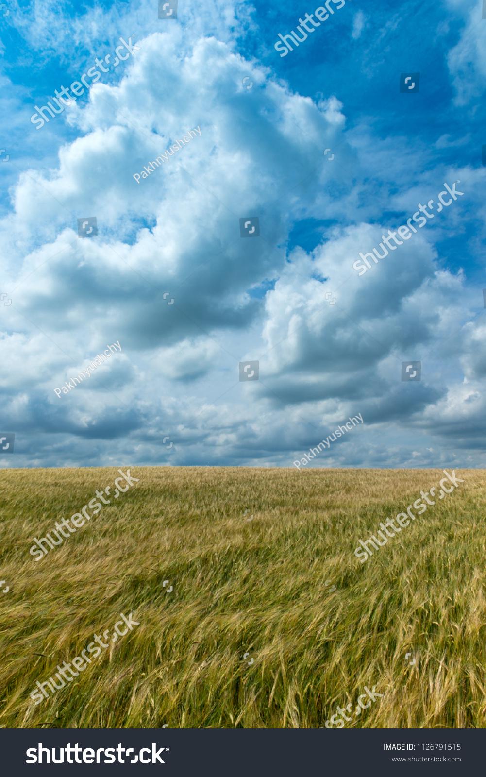 green grass field grass field photos green o - effte.co
