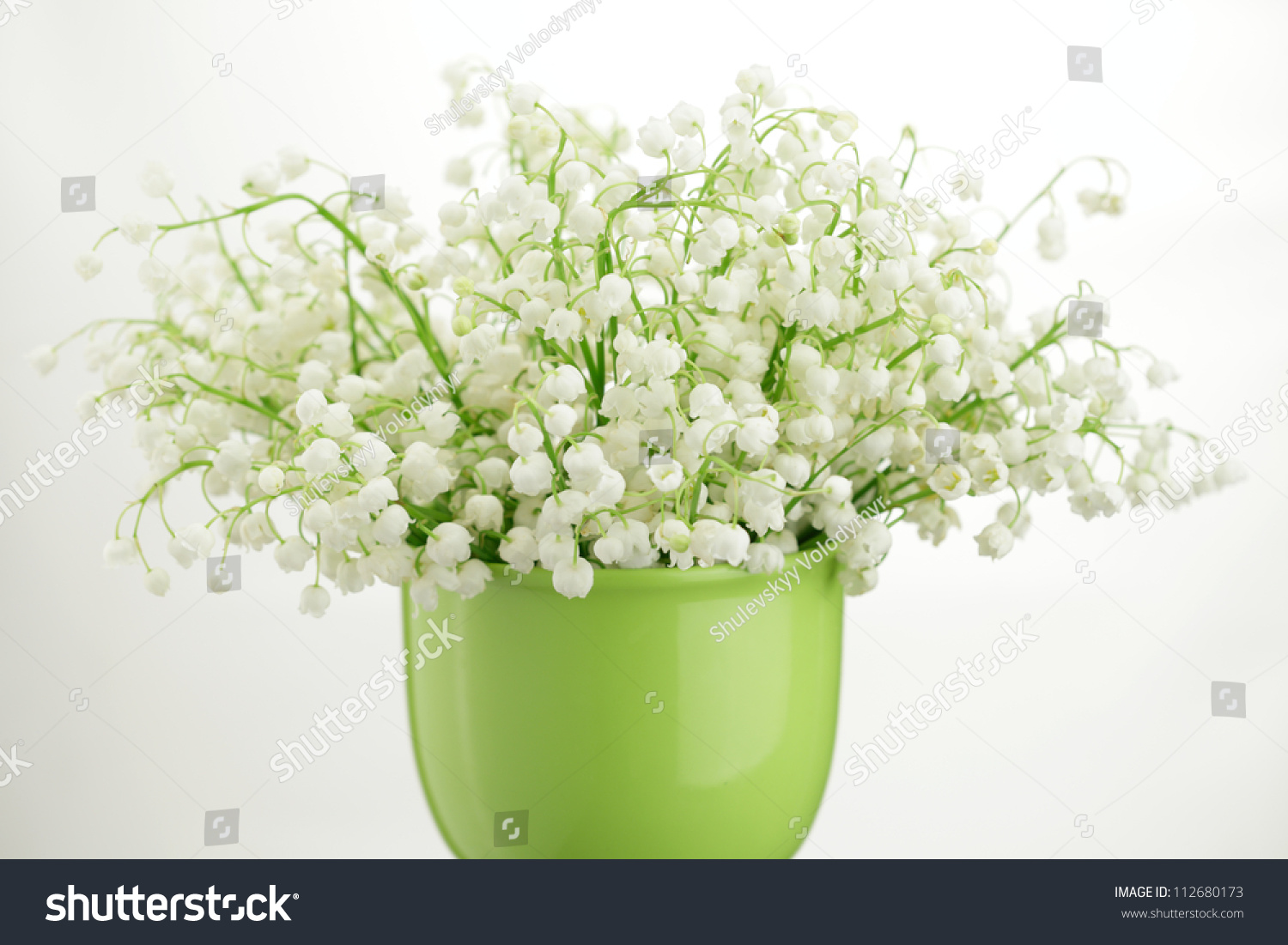 Lily valley bouquet vase isolated on stock photo 112680173 lily of the valley bouquet in a vase isolated on white background reviewsmspy