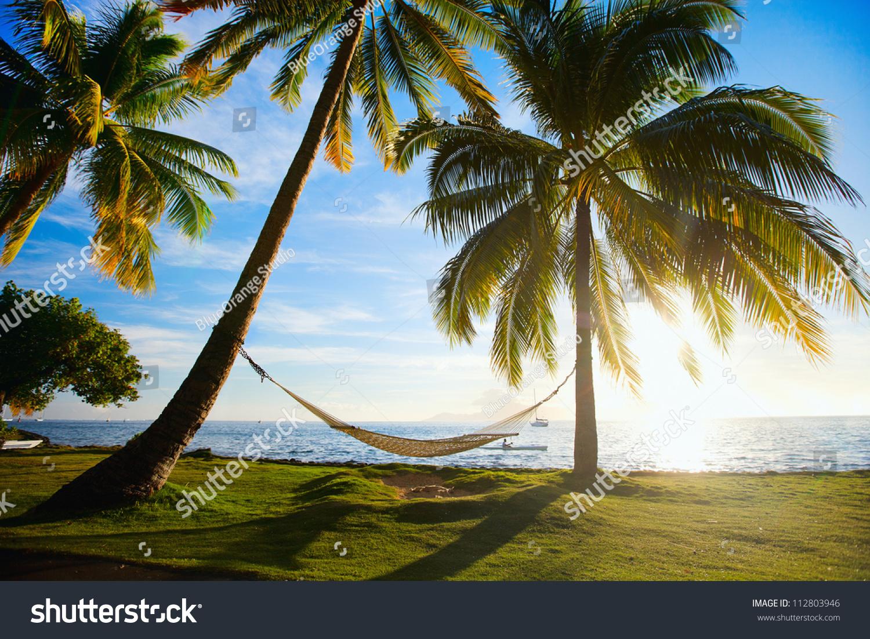Hammock Silhouette Palm Trees On Beautiful Stock Photo