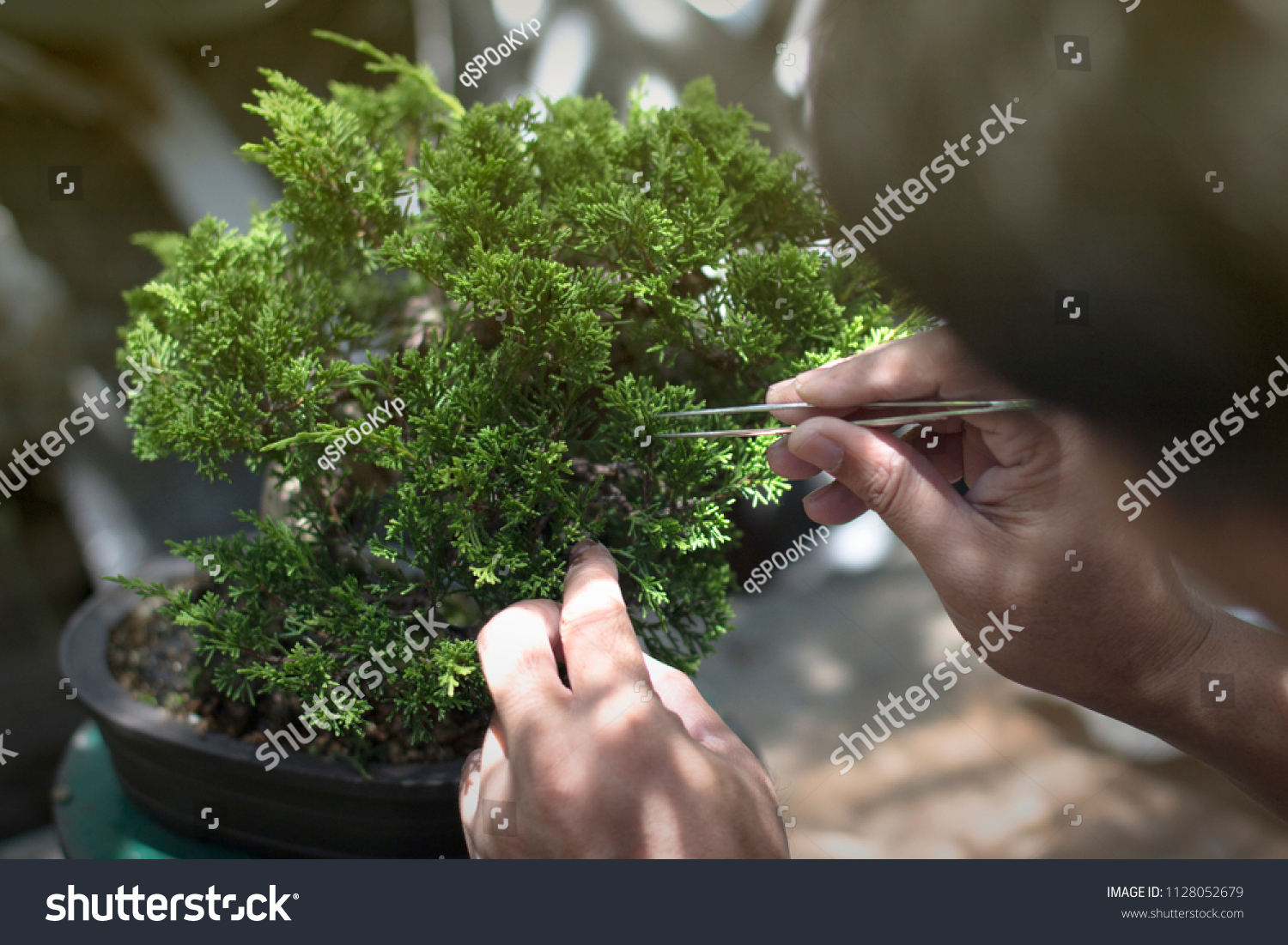 Making Bonsai Trees Handmade Accessories Wire Stock Photo Edit Now What Does Wiring A Do Of And Scissor Tools Stand