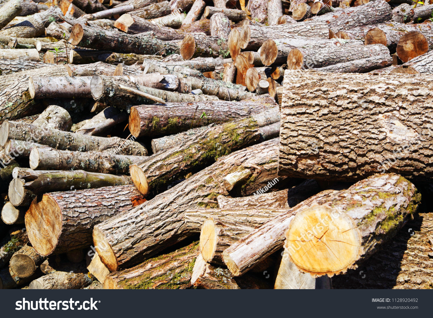 Getting Woodpile Ready For Winter >> Stack Firewood Wooden Log Pile Wood Stock Photo Edit Now