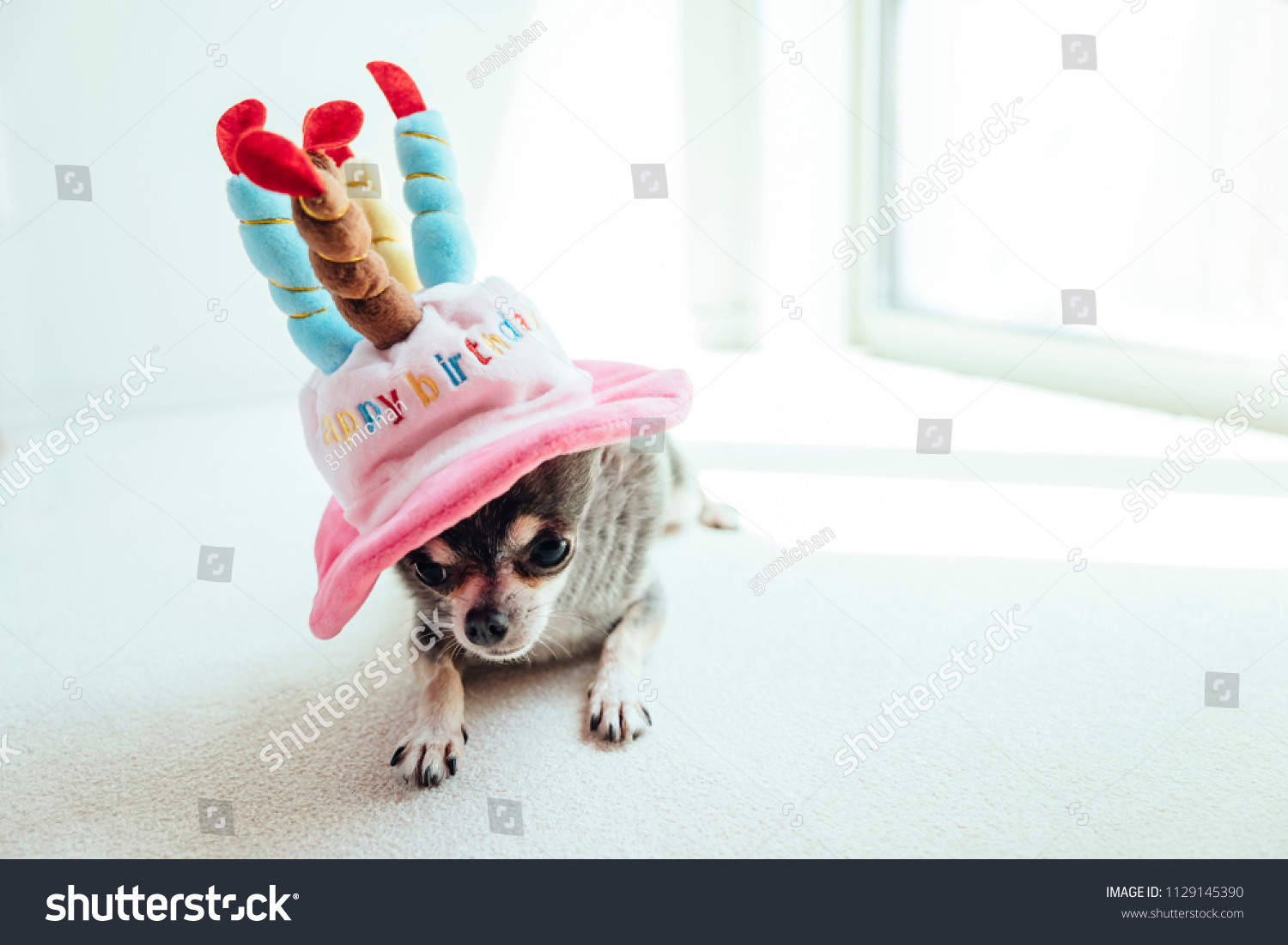 A Dog Lying On Hat In The Shape Of Birthday Cake Is Down