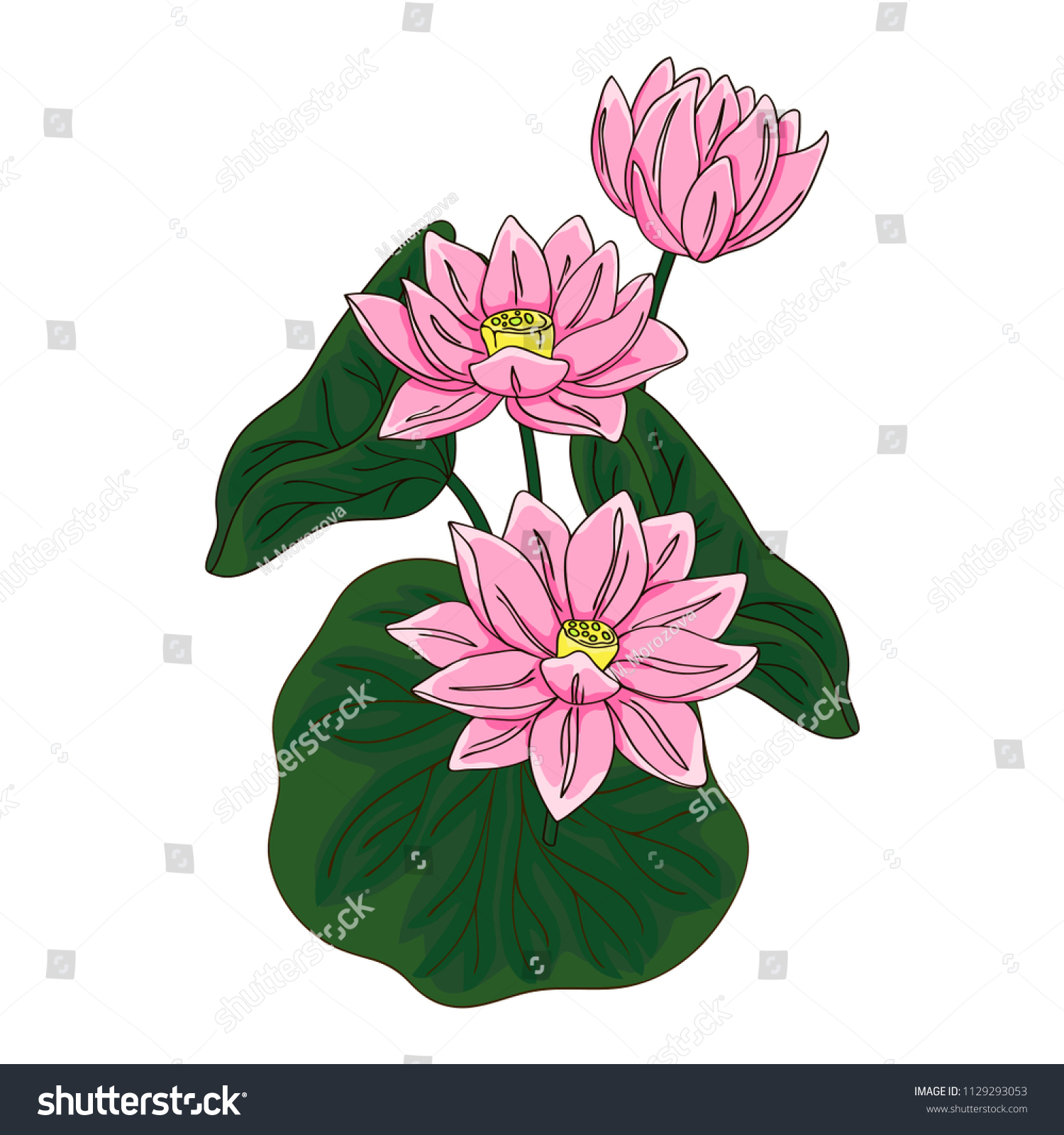 Vector contour color pink chinese lotus stock vector royalty free vector contour color pink chinese lotus flowers leaf asian symbol on white hand drawn izmirmasajfo