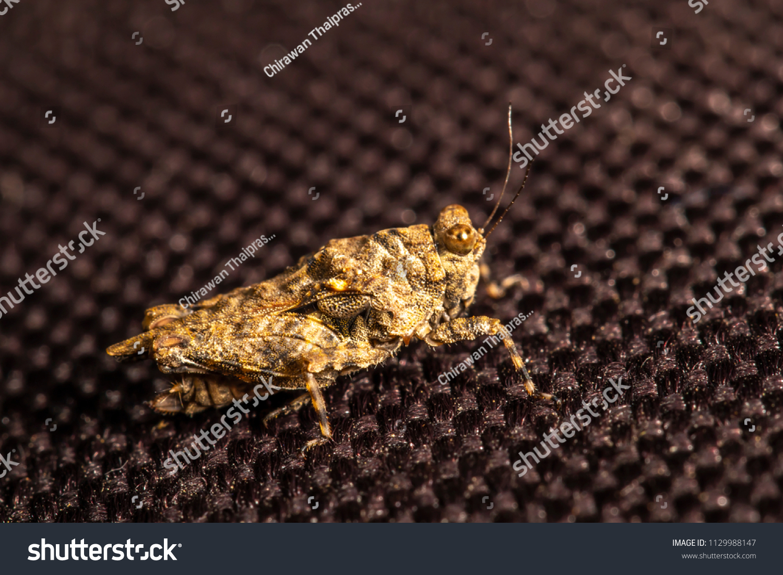 macro shots grasshopper on brown background stock photo (edit now