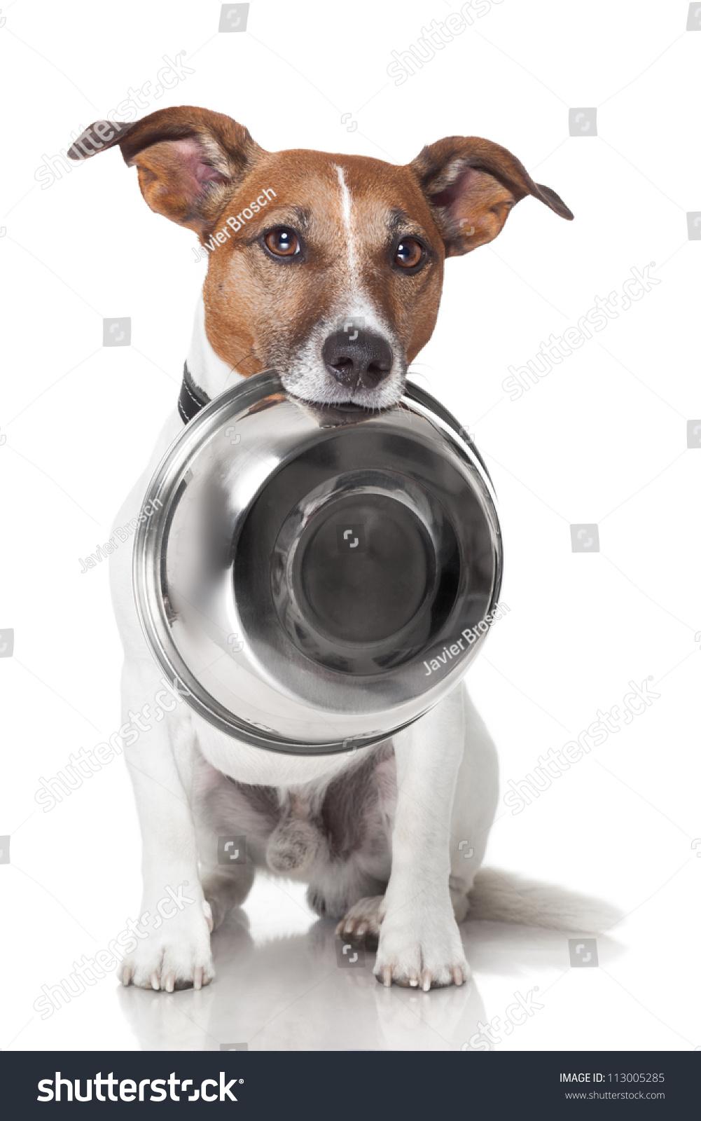 Dog Guarding Food Bowl