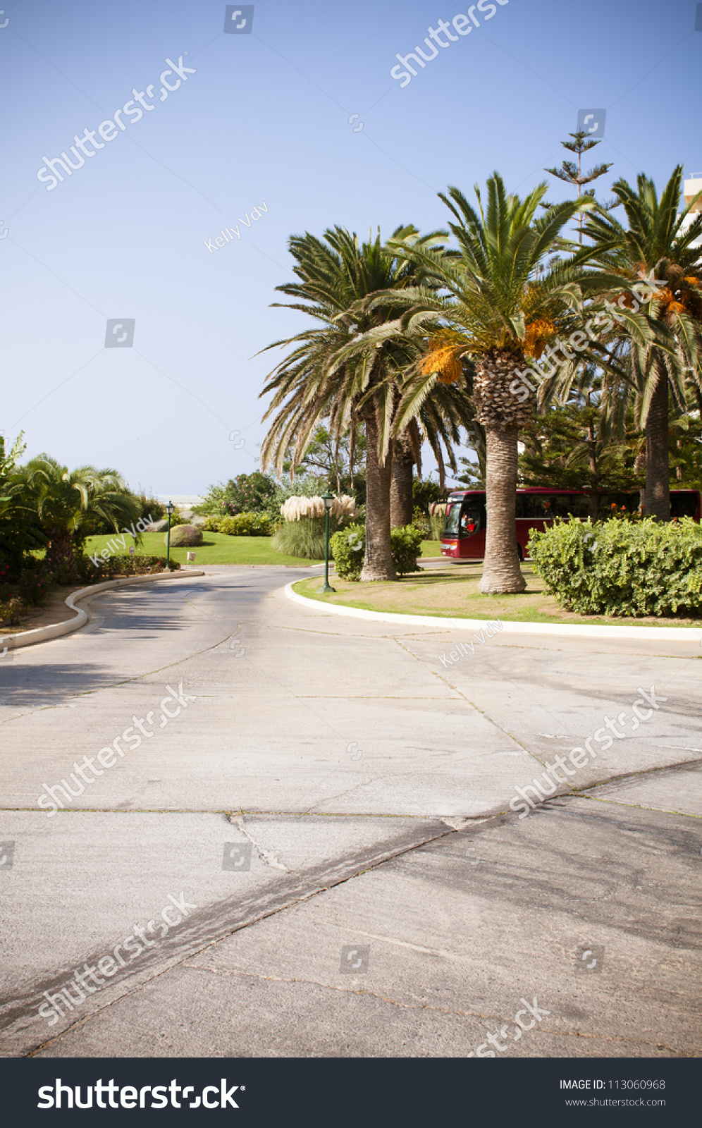driveway with palm trees ez canvas