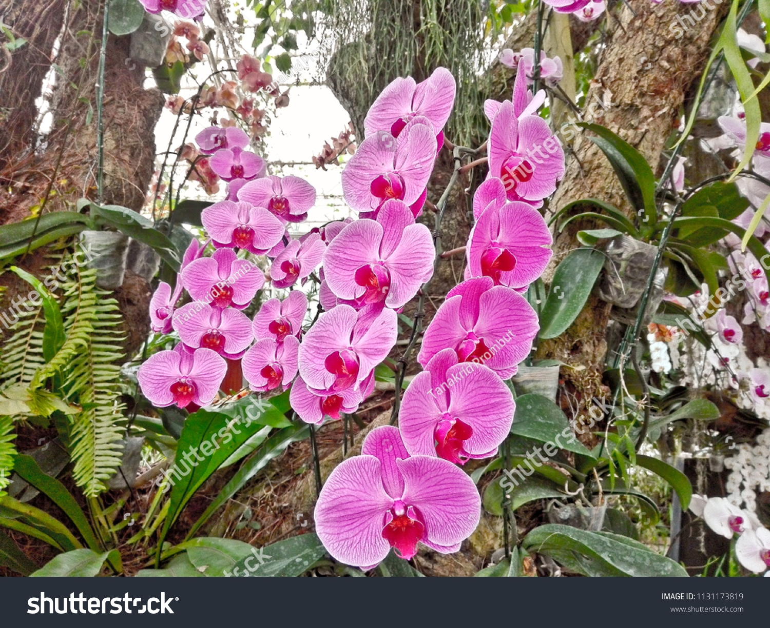 This Orchids Farmer Keep Temperature Control Stock Image