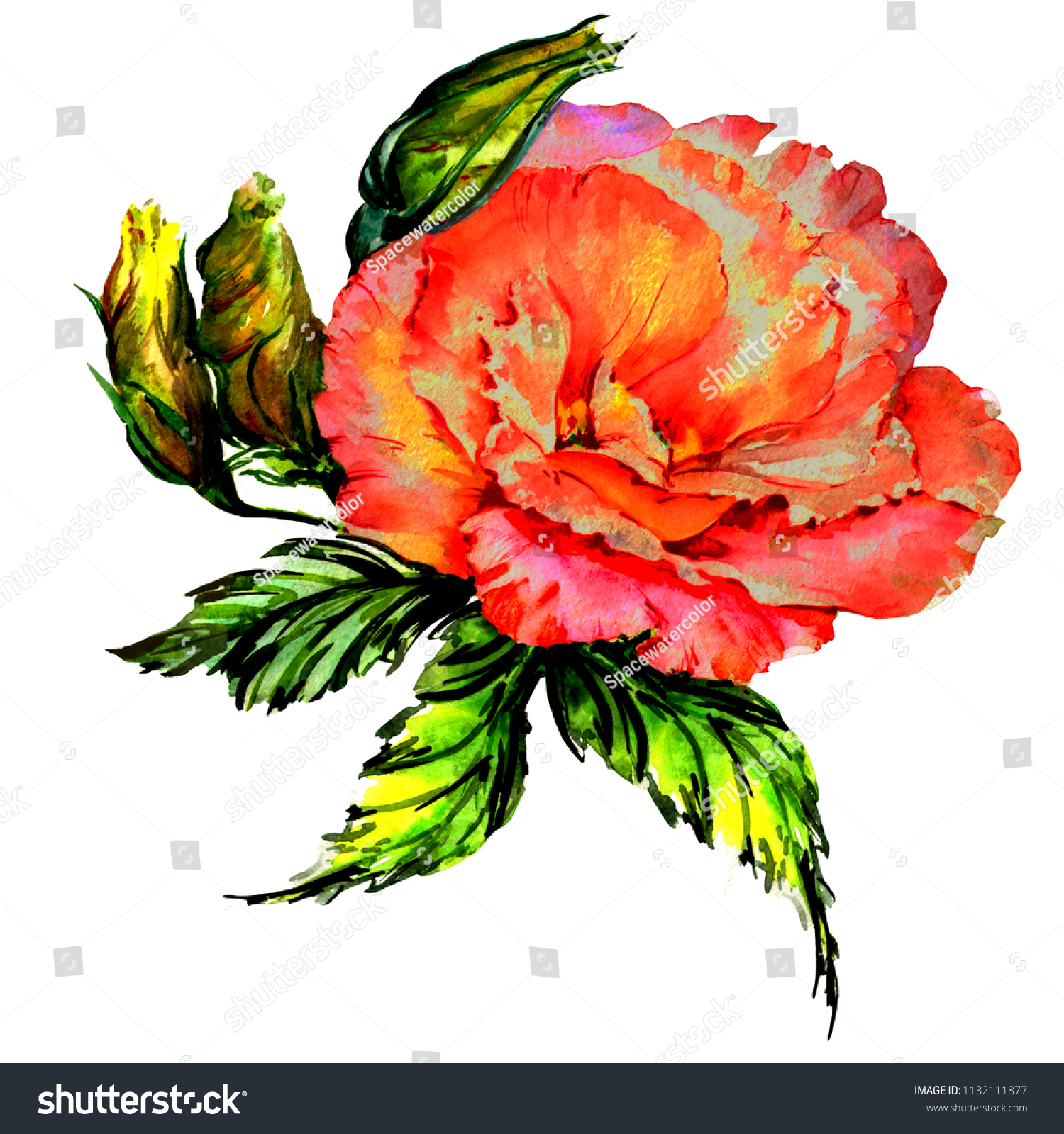 Stock lotus vector water colour picturesquely picturesboss stock photo watercolor wild exotic tropical flowers magic bright summer plants beautiful colorful petals jpg 1500x1600 izmirmasajfo