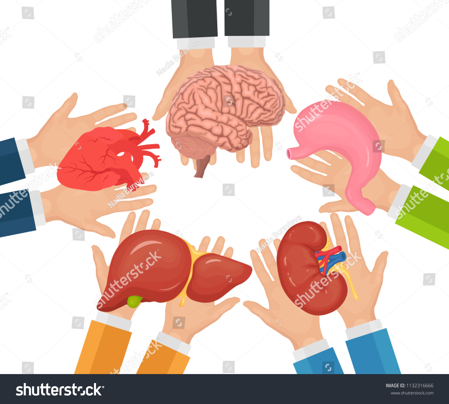 Donate Internal Human Organs Nation Donor Stock Vector Royalty Free