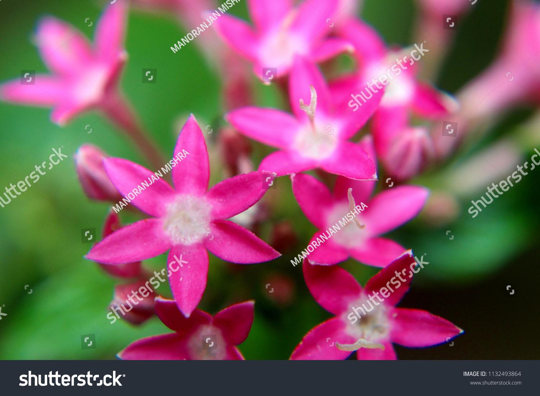 Macro Shot Beautiful Pink Spike Flowers Stock Photo Edit Now