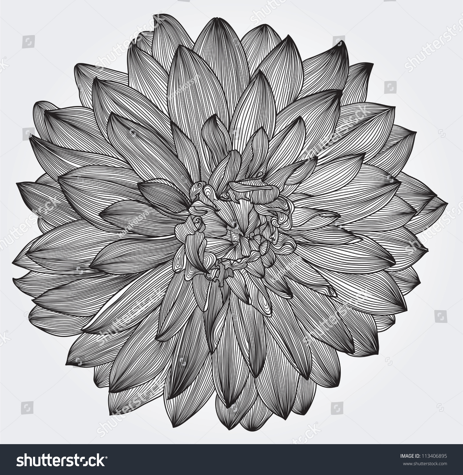 Ink drawing black dahlia flower element stock vector royalty free ink drawing of black dahlia flower element for your design engraving style izmirmasajfo