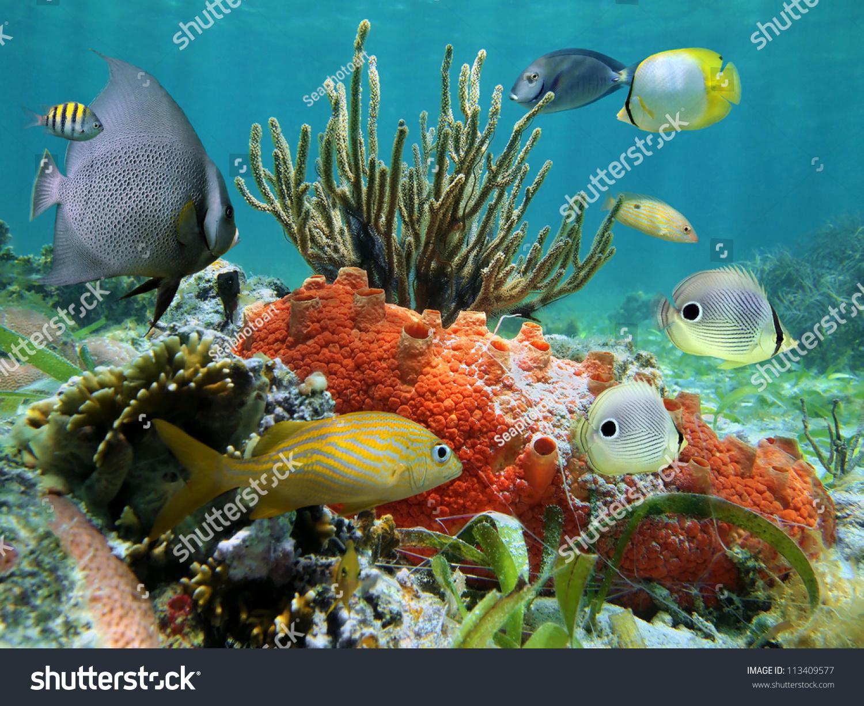 Caribbean Sea Animal Life: Underwater Colors Marine Life Coral Reef Stock Photo