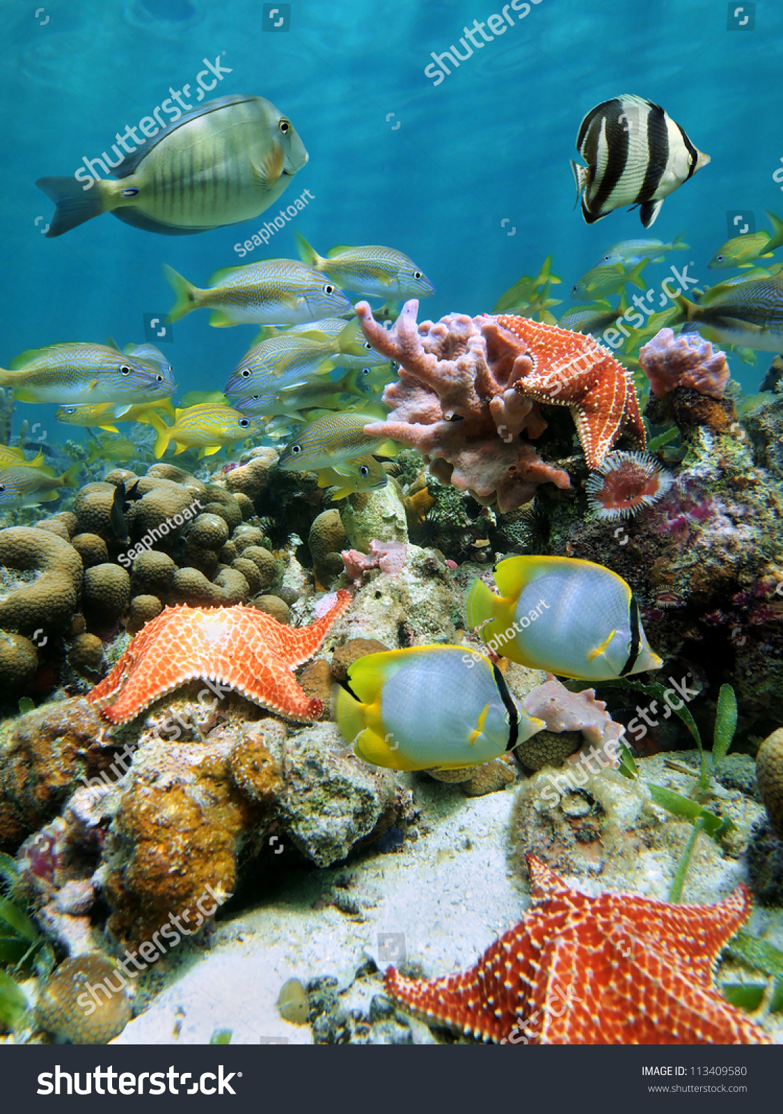 Colorful Underwater Marine Life Stock Photo - Image of ... |Colorful Underwater Life