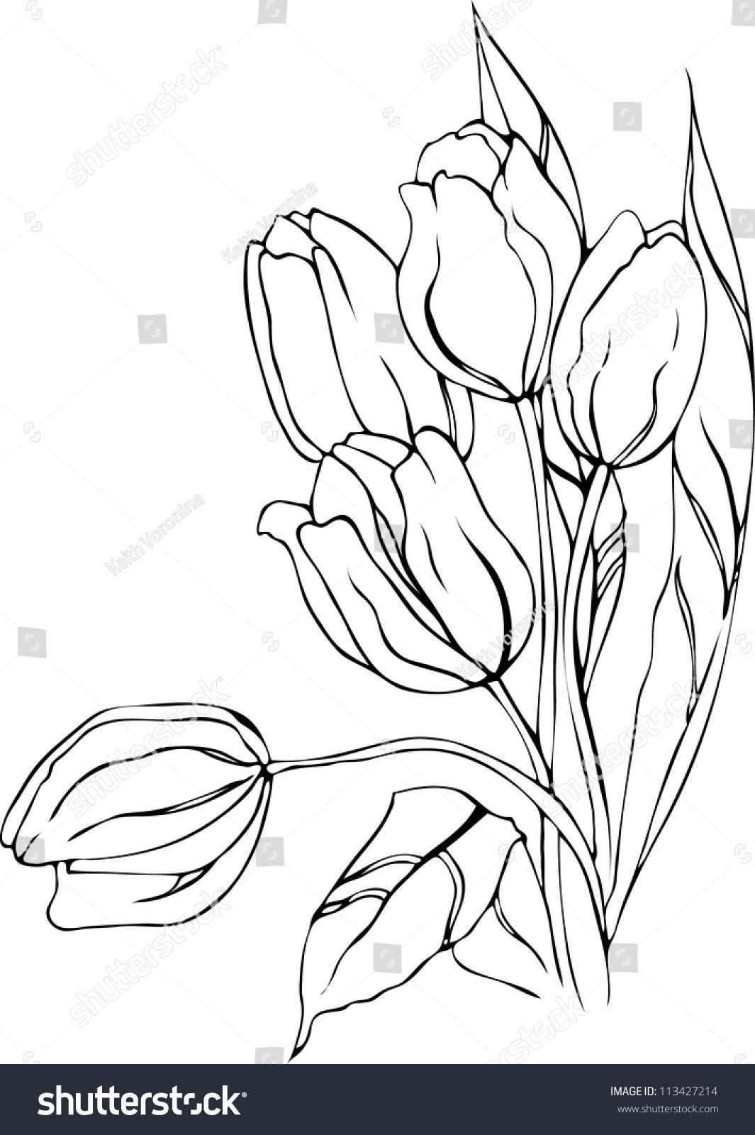 hand drawn tulips vector stock vector 113427214 shutterstock
