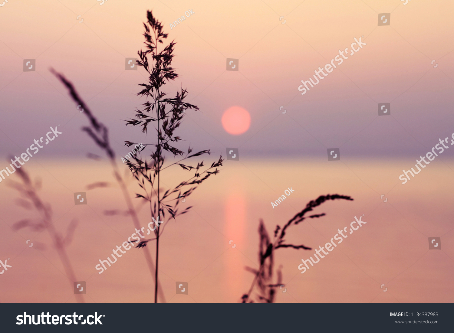 Little grass stem close-up with sunset over calm sea, sun going down over horizon. Pink & purple pastel watercolor soft tones. Beautiful nature background.  #1134387983