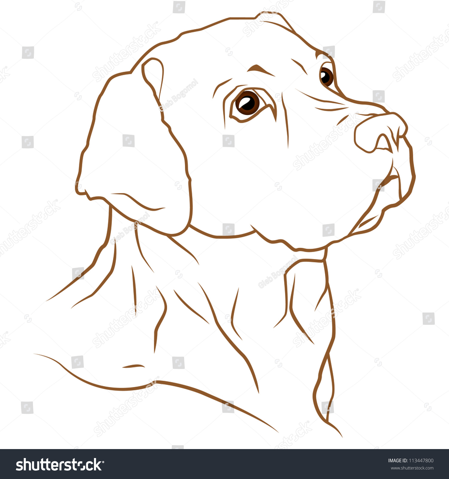 a beautiful vector illustration of a labrador retriever