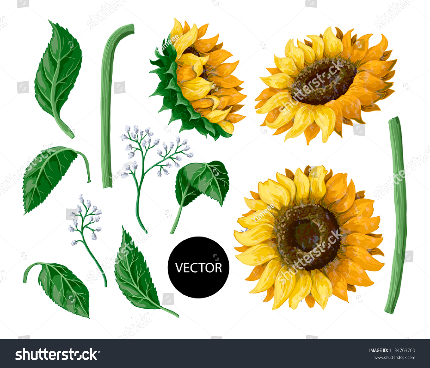 Sunflowers isolated on a white background. Vector illustration.