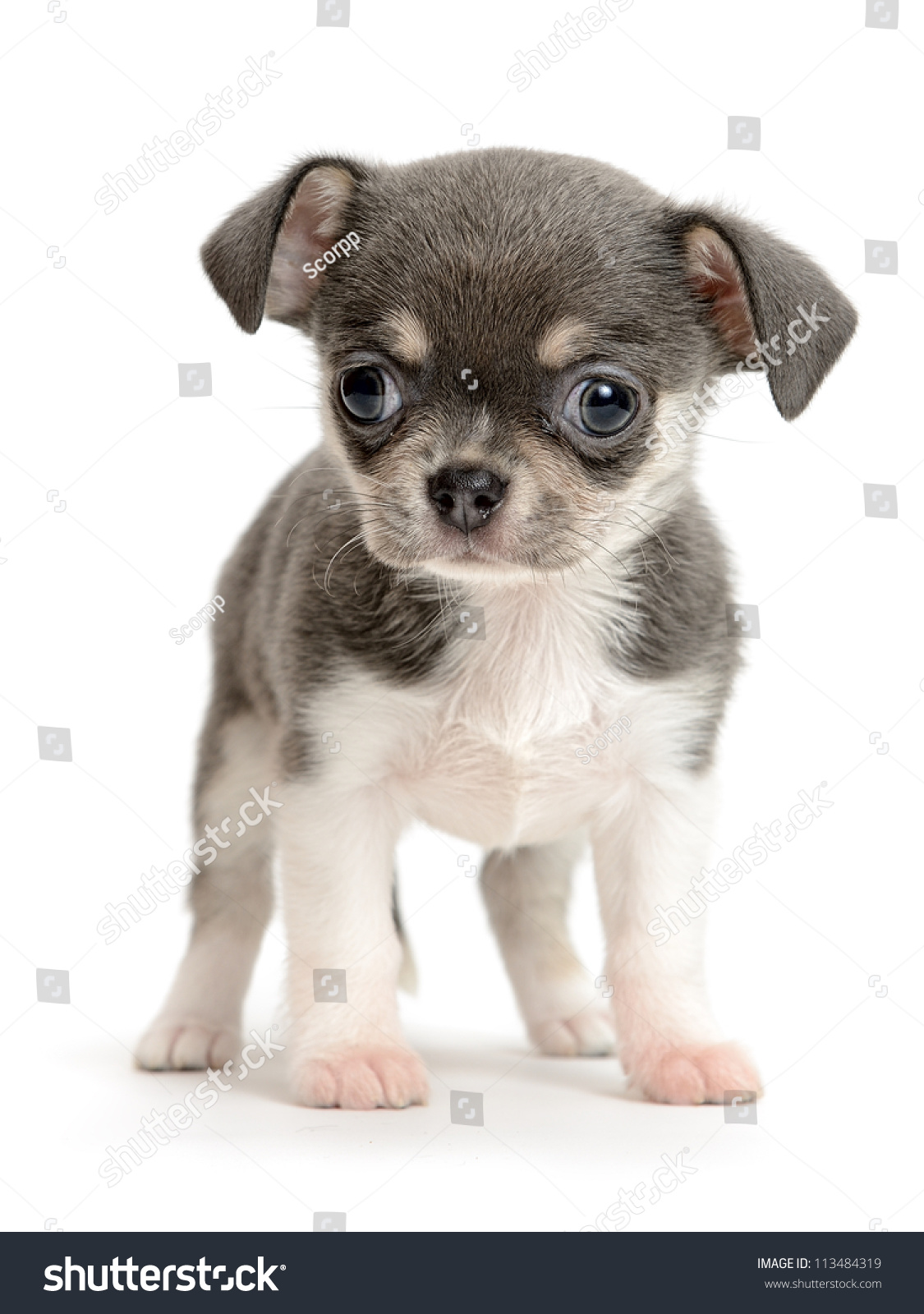 Pet Vet Traverse City, Best Veterinary Clinic, Animal Dental Acme ...