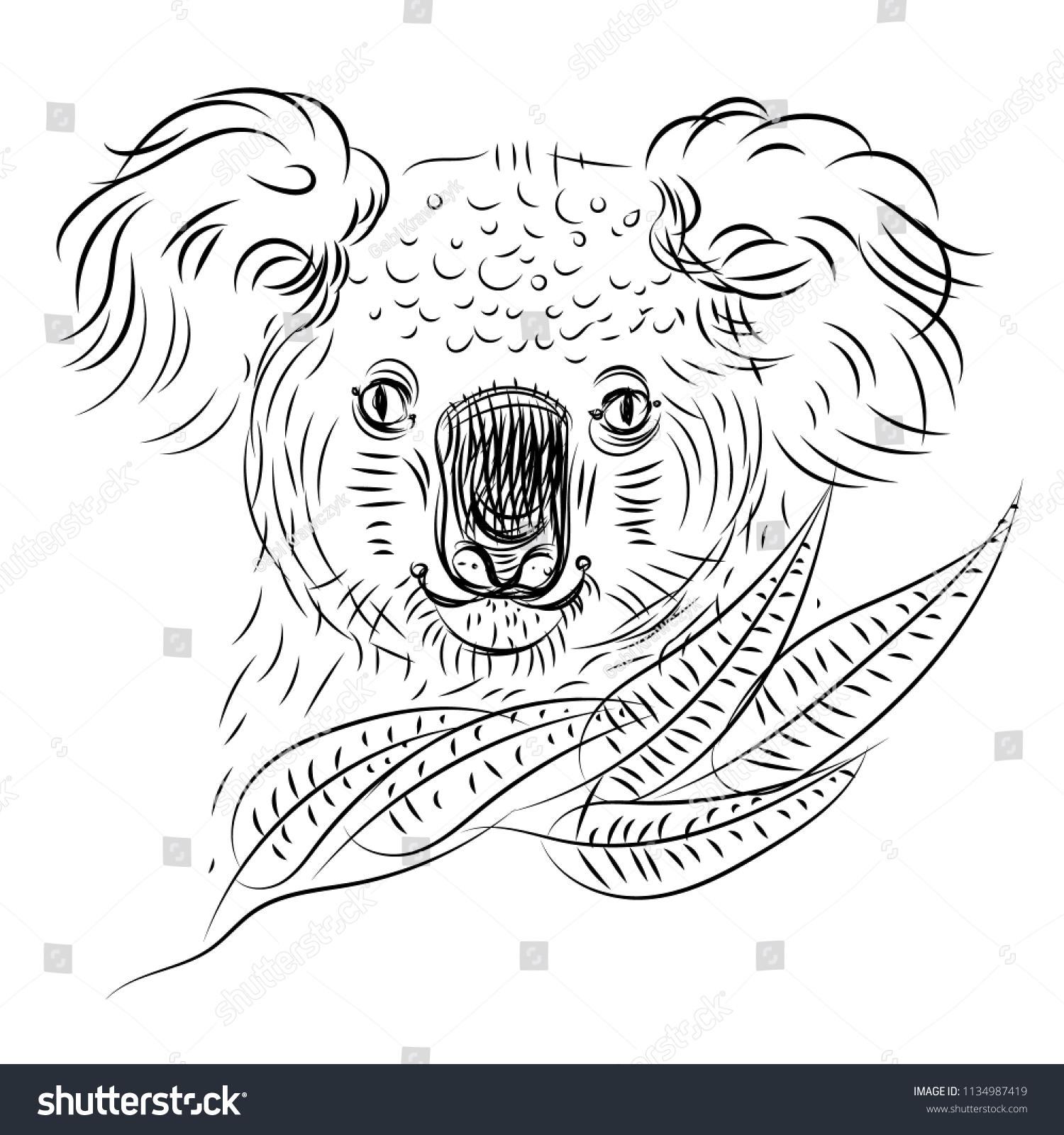Easy Realistic Koala Drawings Www Topsimages Com