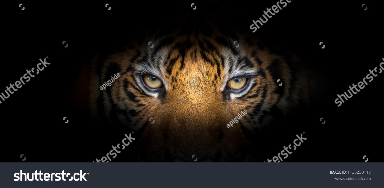 Tiger face on black background #1135230113