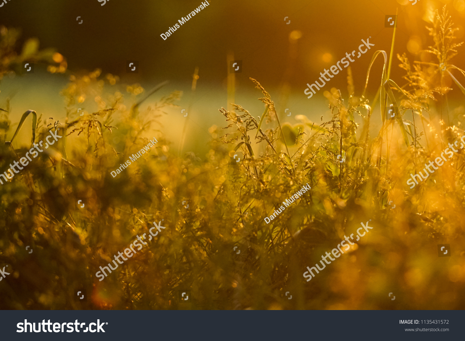 Close up silhouette of a grass field by sunset #1135431572