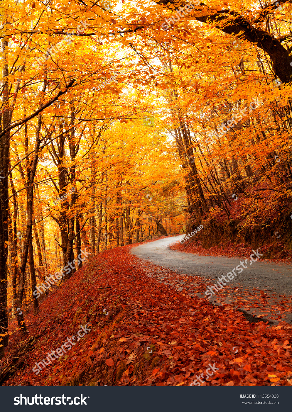 Autumn Landscape With Road And Beautiful Colored Trees ...