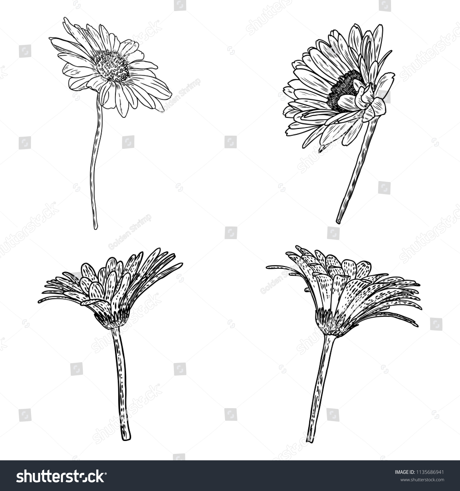 Daisy floral botany collection sketch daisy stock vector royalty daisy floral botany collection sketch daisy flower drawings black and white line art isolated izmirmasajfo