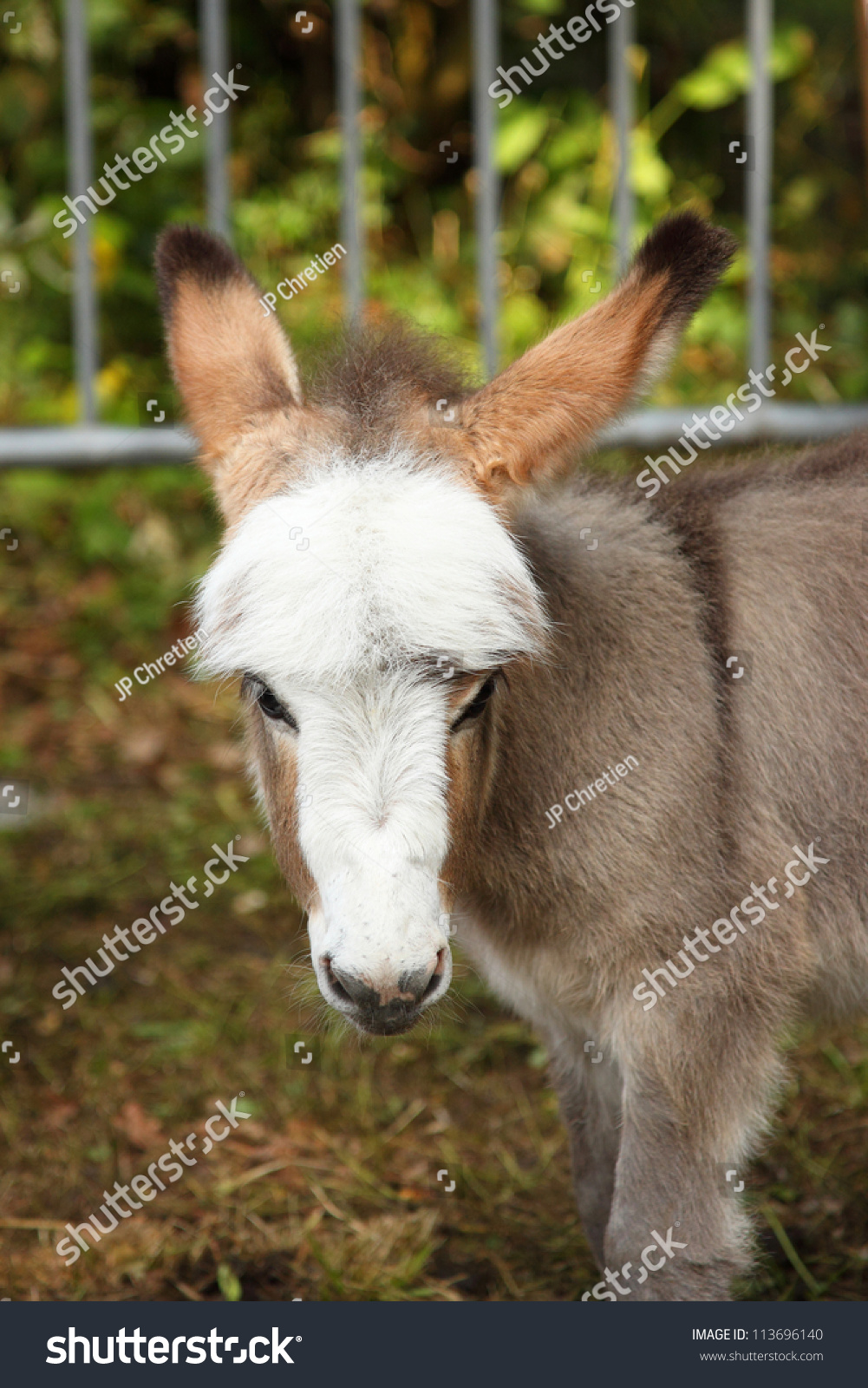 Young ass young donkey young ass
