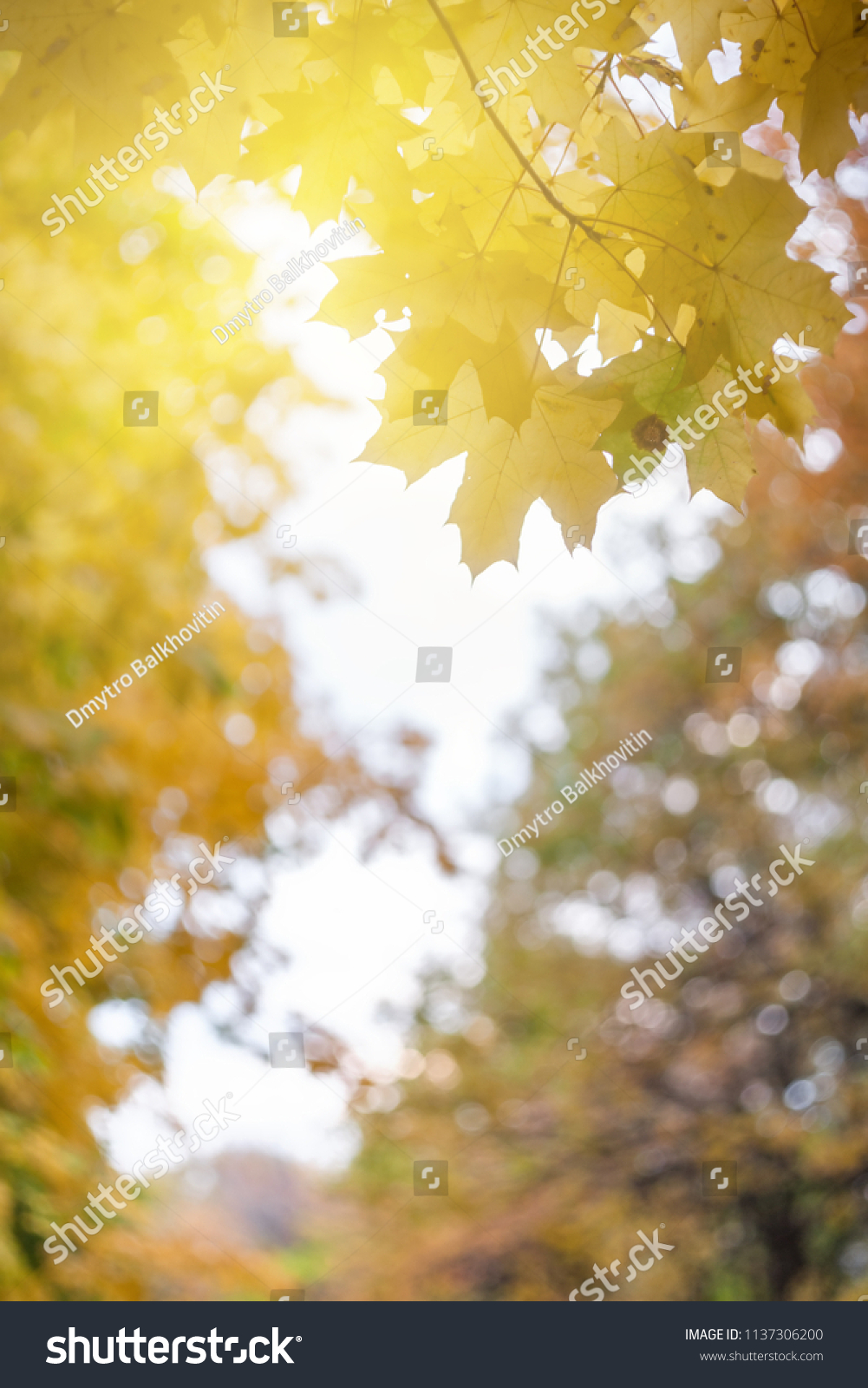 soft autumn background bright leaves nature stock photo (edit now