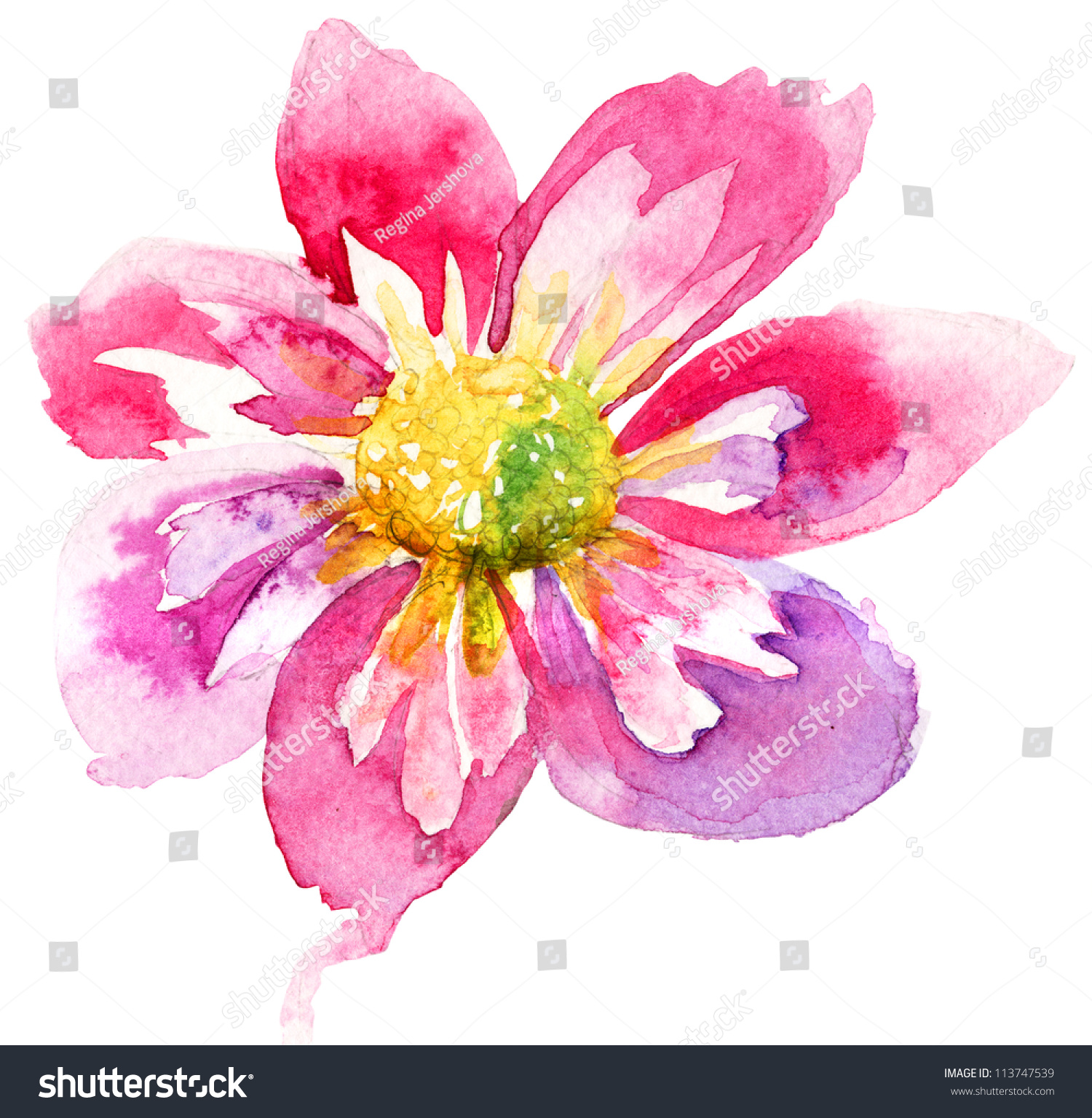 Beautiful Pink Flower Watercolor Painting Stock Illustration